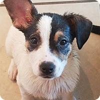 Adopt A Pet :: Delilah - joliet, IL