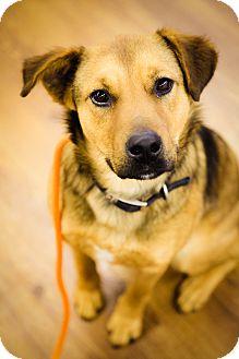 German Shepherd Dog Mix Dog for adoption in Lake Odessa, Michigan - Bauer