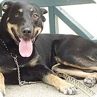 Adopt A Pet :: Gypsy - Peru, IN