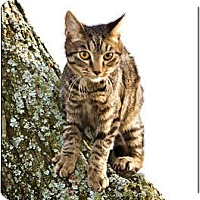 Adopt A Pet :: Martin - Owensboro, KY