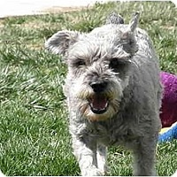 Adopt A Pet :: Moses - Meridian, ID