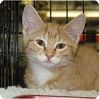Adopt A Pet :: Georgette - Port Republic, MD