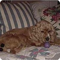 Adopt A Pet :: Winston - Sugarland, TX