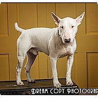 Adopt A Pet :: Rowdy - Owensboro, KY