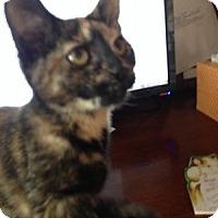 Adopt A Pet :: Shelly - East Hanover, NJ