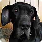 Adopt A Pet :: Lukas