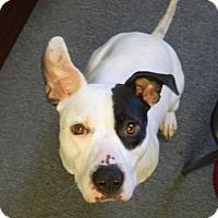 Adopt A Pet :: Karma - Huntsville, TN