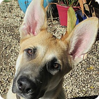 Adopt A Pet :: Levi - Dripping Springs, TX