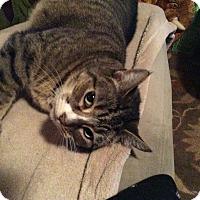 Adopt A Pet :: Emma - Santa Monica, CA