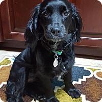 Adopt A Pet :: Willow - Huntsville, AL