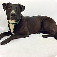 Adopt A Pet :: Timmy - Mission Viejo, CA