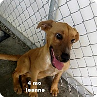 Adopt A Pet :: Leanne - Marlton, NJ