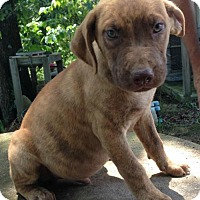Adopt A Pet :: Jasper - Trenton, NJ