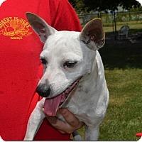 Adopt A Pet :: Maggie - Tavares, FL