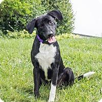 Adopt A Pet :: Max - Naperville, IL