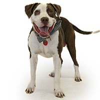 Adopt A Pet :: Kato - St. Cloud, FL