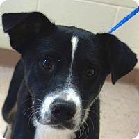 Border Collie Mix Dog for adoption in McDonough, Georgia - Myrtle