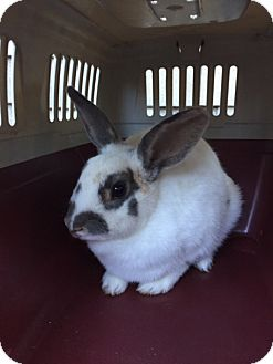Other/Unknown Mix for adoption in St Helena, California - Matilda
