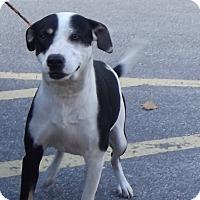 Adopt A Pet :: Mister - Cheboygan, MI