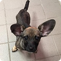 Adopt A Pet :: Lila - Matawan, NJ