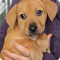 Adopt A Pet :: Tara - Harrison, NY
