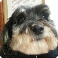 Adopt A Pet :: Sugar - Lexington, KY
