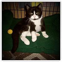 Adopt A Pet :: OREN - Medford, WI