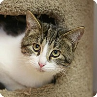 Adopt A Pet :: Ignatious - Kettering, OH