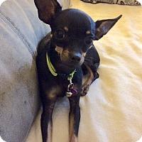 Adopt A Pet :: Tita - Hialeah, FL
