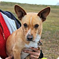 Adopt A Pet :: Frido - Dillsburg, PA