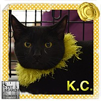 Adopt A Pet :: K.C. - Washington, PA