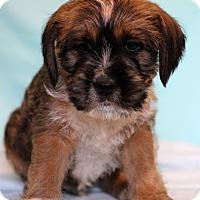 Adopt A Pet :: Amal - Waldorf, MD