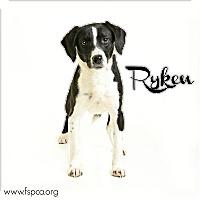 Adopt A Pet :: Ryken - Troy, VA