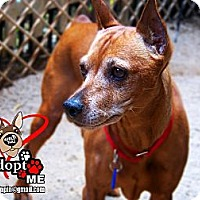 Adopt A Pet :: Max - Huntington Beach, CA