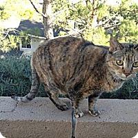 Adopt A Pet :: Sassy - Laguna Woods, CA