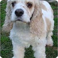 Adopt A Pet :: Becca - Sugarland, TX