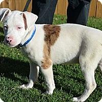 Adopt A Pet :: Porter - Norman, OK