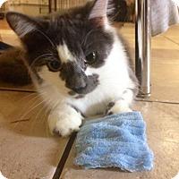 Adopt A Pet :: Stormy - Oviedo, FL