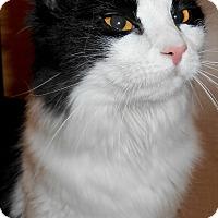 Adopt A Pet :: Delana - Chattanooga, TN