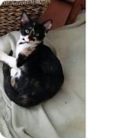 Adopt A Pet :: Sonia - Delray Beach, FL