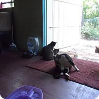 Adopt A Pet :: Snip - Colbert, GA