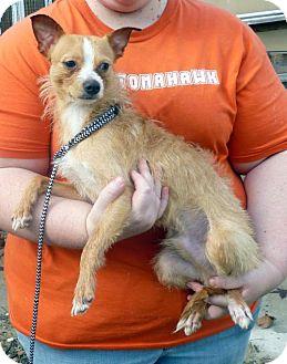 Terrier (Unknown Type, Medium) Mix Dog for adoption in Livingston, Texas - Orlando