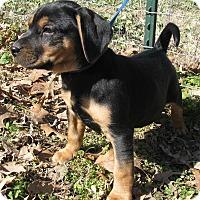 Adopt A Pet :: Charlie - Bedminster, NJ