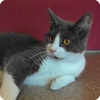 Adopt A Pet :: Diego - Larned, KS