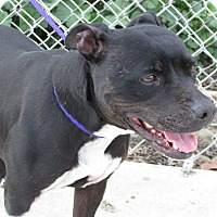 Adopt A Pet :: Lucy - grants pass, OR