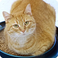 Adopt A Pet :: Guinevere - St Louis, MO