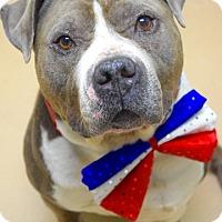 Adopt A Pet :: Ben - Dublin, CA