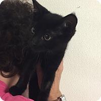 Adopt A Pet :: Liz #7 - Lunenburg, MA