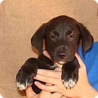Adopt A Pet :: Wonton - Oviedo, FL