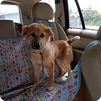Adopt A Pet :: 'FONDUE' - Agoura Hills, CA